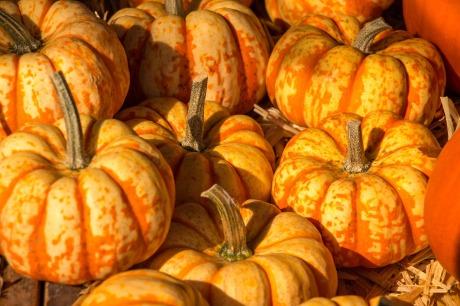 pumpkin-1763432_1920.jpg